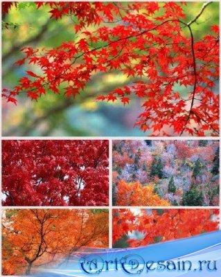 Фоны для фотомонтажа - Осенний коллаж