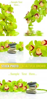 Stock photo - Beautiful orchid