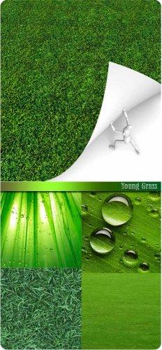 Клипарт - Молодая зелёная трава (Young grass)