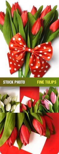 Фото Сток - Тюльпаны (Fine Tulips)