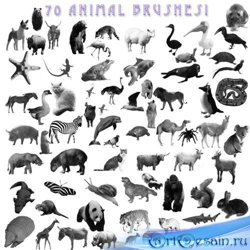Кисти для фотошопа - Животные и Насекомые. Часть 1