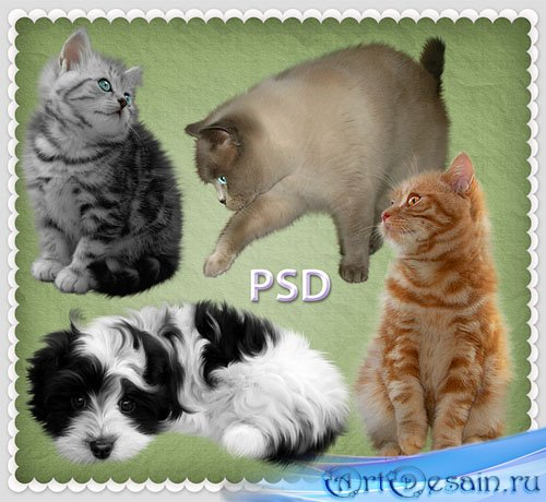 PSD-исходник - Котята и щенок