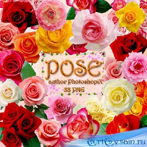 PNG клипарт для Photoshop – Розы / Rose