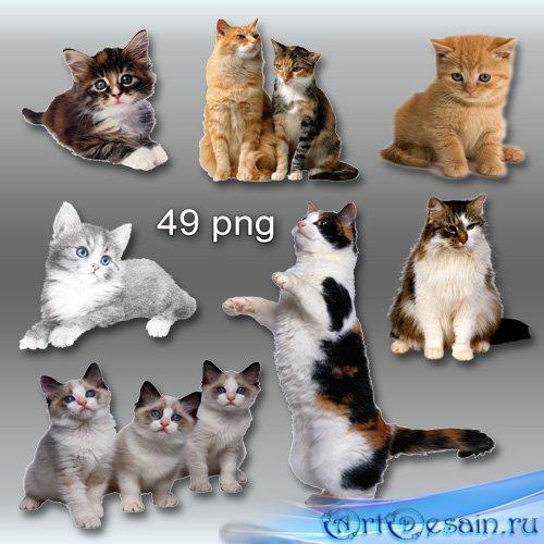 Клипарт PNG - Кошки, котята