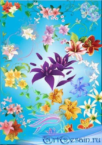 PNG клипарт – Векторные лилии