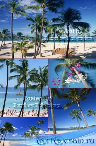 Фотосток – Пальмы