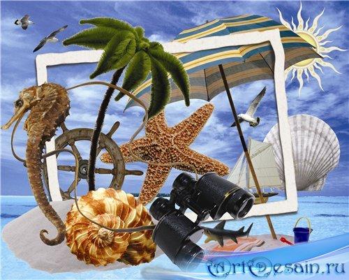 Клипарт png морские ракушки