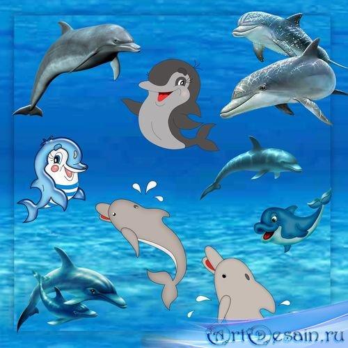 Клипарт - Дельфины
