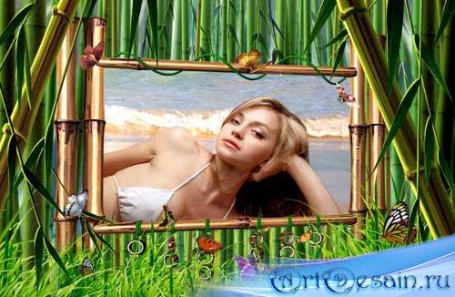 Рамка для фотошоп  –  Бамбук и бабочки