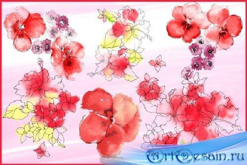 Клипарт - Прозрачные цветы акварелью