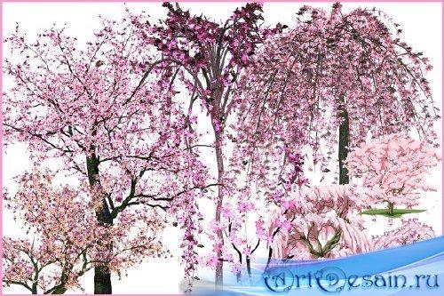 Клипарт - Деревья в розовом цвету