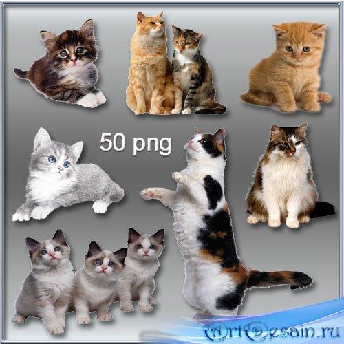 Кошки, котята PNG