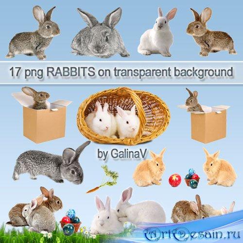 Кролики PNG клипарт | Rabbits PNG clipart