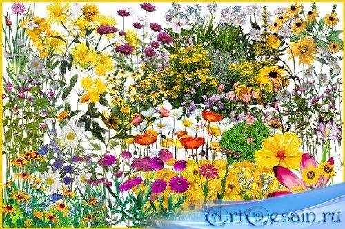 Клипарт - Цветы для создания полян