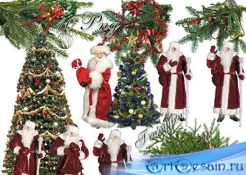 Новогодний клипарт - Дед Мороз, елки, хвойные ветки