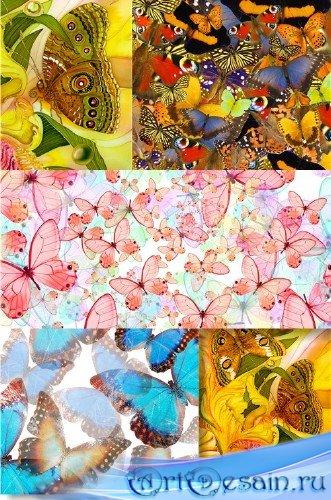 Растровый клипарт - Разноцветные пестрые бабочки