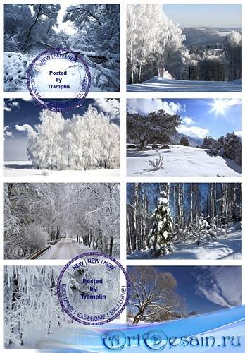 Зимние Пейзажи – Зима, лес, деревья