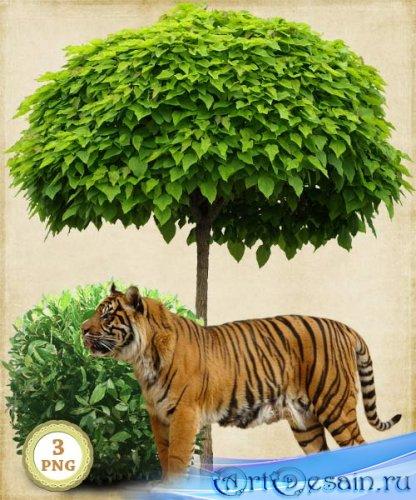 Клипарт тигр у дерева