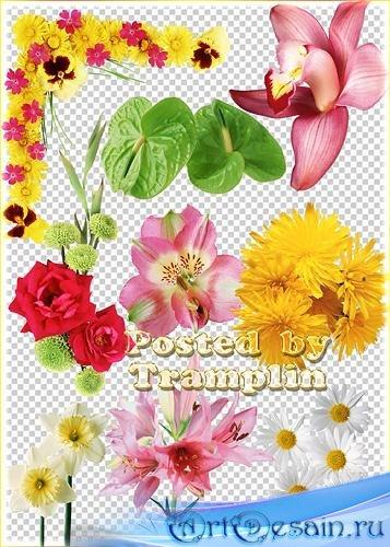 Клипарт Цветочный – Лилии, розы, ромашки, гвоздики, орхидеи