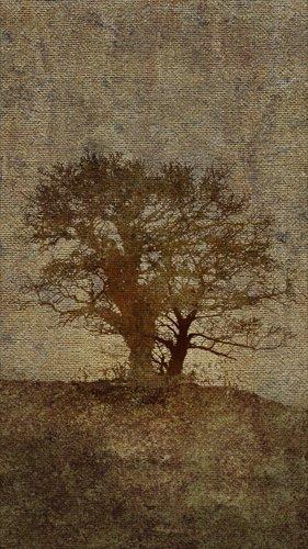 PSD Исходники - Взъерошенное дерево