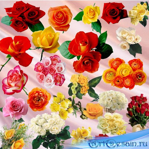 Clipart PNG - Rose