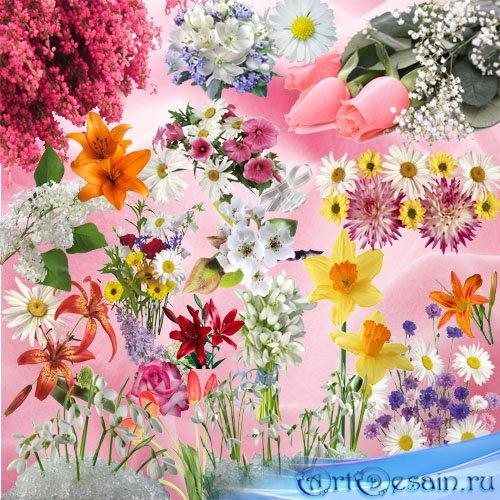 Клипарт png - Цветочный