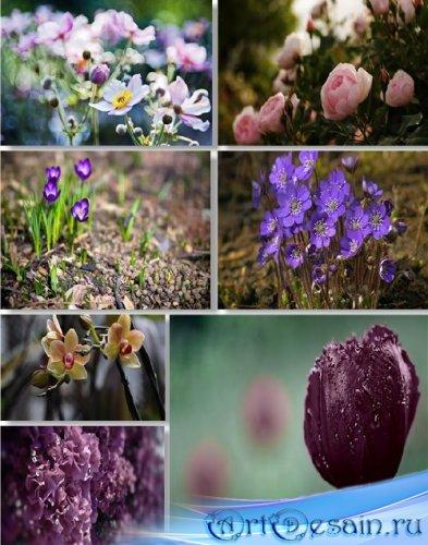 Растровый клипарт - Сборник цветов