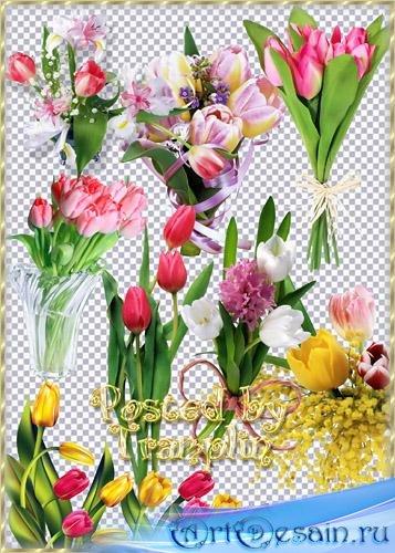 Клипарт – Разноцветные тюльпаны для милых женщин