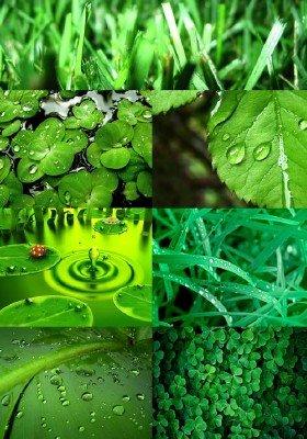 Зеленые обои на рабочий стол