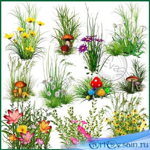 Клипарт - Цветы, грибы для создания полян
