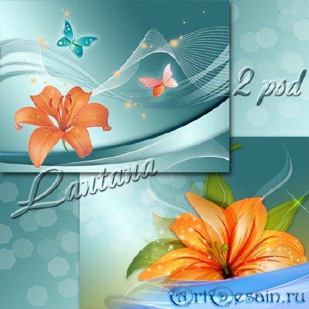 PSD исходники для фотошопа - Тигровая лилия