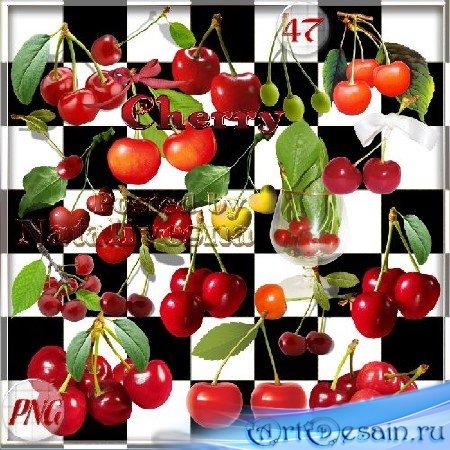 Клипарт на прозрачном фоне – Спелая вишня поспела в саду…
