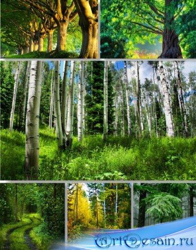 Клипарт растровый - лесные пейзажи