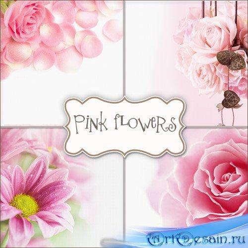 Фоны - Садовые розы