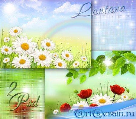 PSD исходники - Мне милей цветы простые - ромашки, маки полевые
