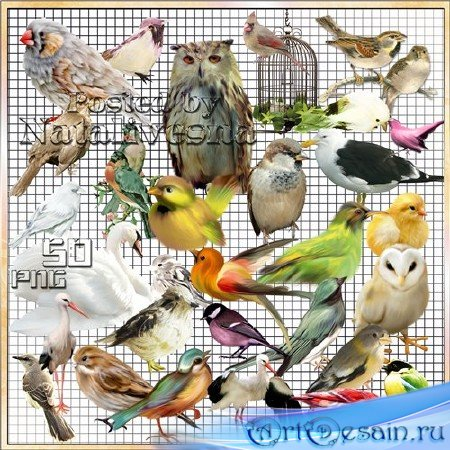 Клипарт на прозрачном фоне – Разноцветные птички – невелички 2
