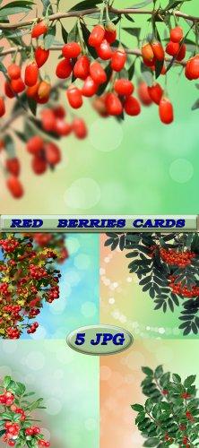 Карточки с красными ягодами