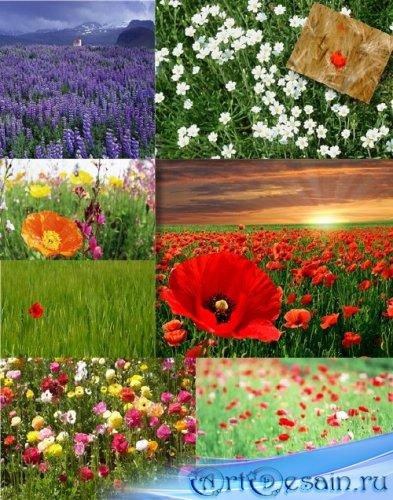Цветочные растровые фоны