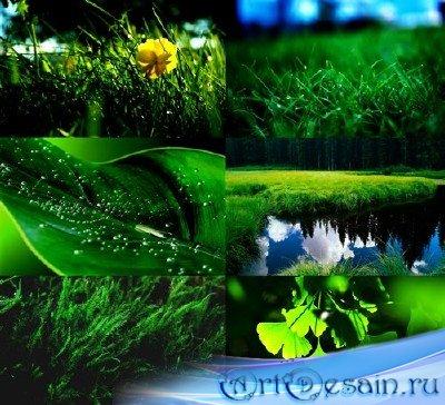 Зеленые широкоформатные обои природа