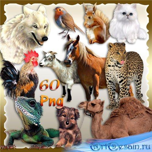 Разные животные и птицы – PNG клипарт