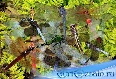 Клипарт Быстрые крылья стрекозы