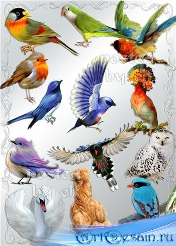 Png клипарт - Птички встречаются разные - синие, жёлтые, красные…