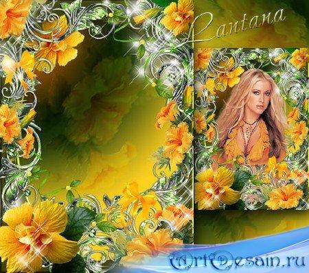 Рамочка - Распахнуты, вот-вот взлетят цветы, в них солнце золотое затаилось