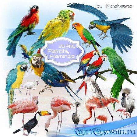 Клипарт  в PNG –  Попугаи, Фламинго…