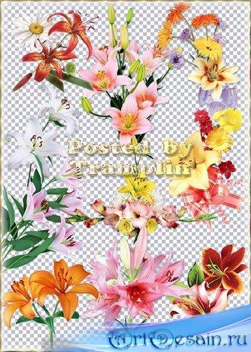 Лилии на прозрачном фоне - Цветы серебристые - Лучи золотистые