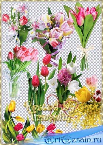 Клипарт в Png на прозрачном фоне – Разноцветные тюльпаны