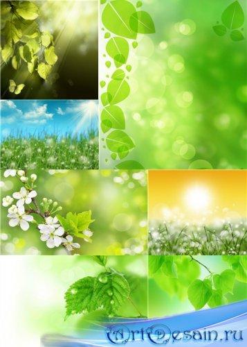 Растровый клипарт - Нежная зелень