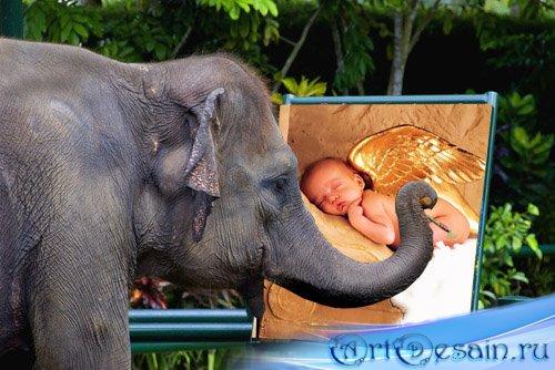 Рамка для фото - ваше фото рисует слон