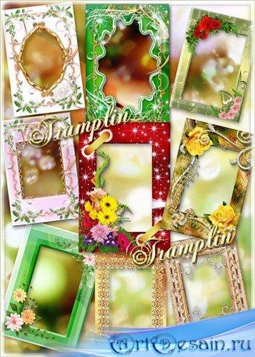 Сборник цветочных рамок  – Земные звезды – Разноцветные цветы