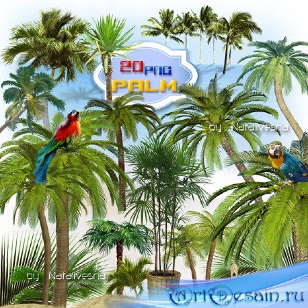 Клипарт  в PNG –  Финиковые, кокосовые пальмы …